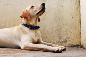Erwachsenen Trockenfutter Hund