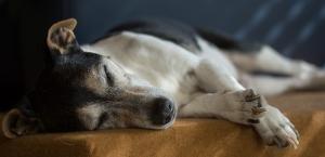 Senior Trockenfutter Hund