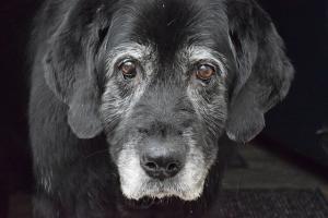 Senior Nassfutter Hund