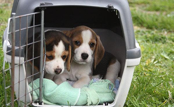 hundebox hundeboxen f r zuhause gro klein g nstig kaufen. Black Bedroom Furniture Sets. Home Design Ideas