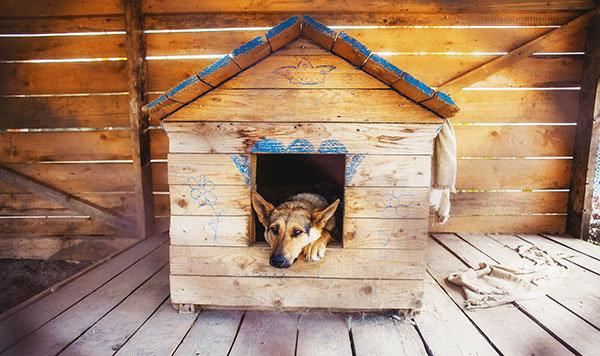 Hundebox für Zuhause