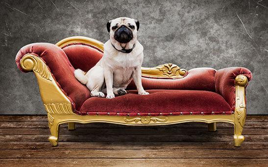 Hundesofa Barock