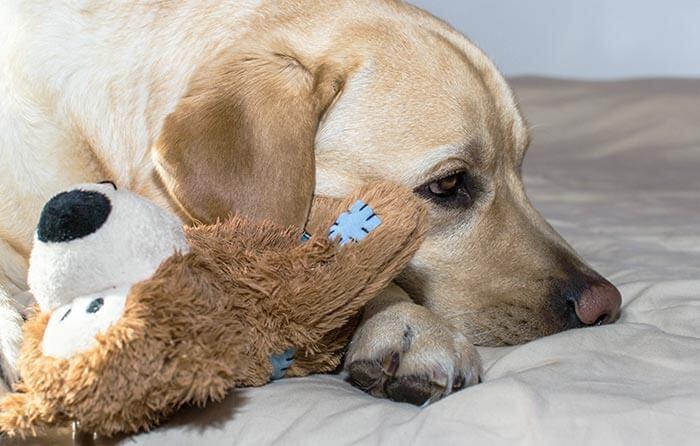 Hundekuscheltier Hundeplüschtier