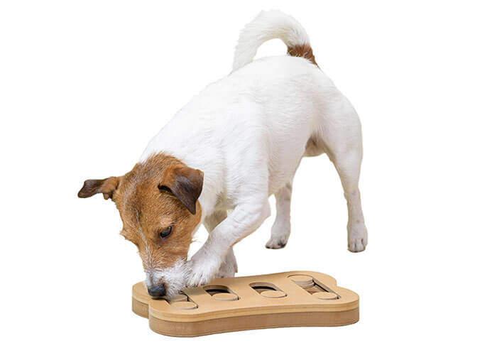 Intelligenzspielzeug für Hunde Brain Board Bälle und Mehr