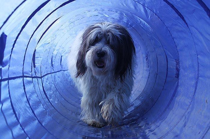 Agility Geräte Tunnel
