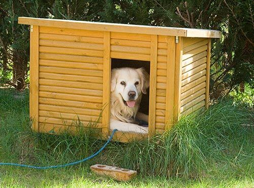 Isolierte Hundehütte Holz Sommer