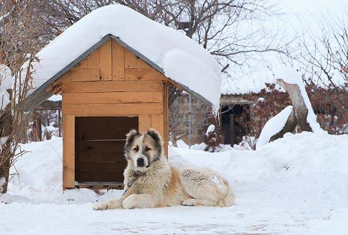 Hundehütte isoliert Winter