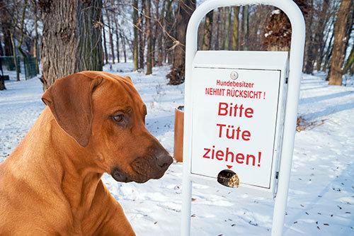 Hundekotbeutel