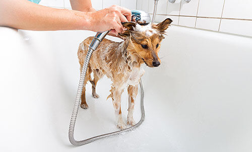 Shampoo für Hunde Anwendung