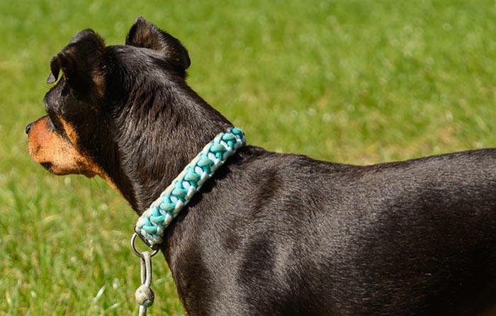 Hundehalsband geflochten