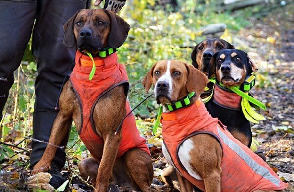 Hundeschutzweste - Hundewarnweste